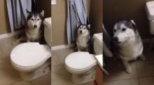 น่ารักอ่ะ!! เมื่อน้องหมาไม่อยากอาบน้ำ โวยวายลั่น!!