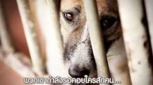 ซึ้งหนักมาก ! น้ำตาไหล!!! เรื่องราวชีวิต น้องมูลี่ จากหมาถูกทิ้ง สู่ชีวิตใหม่ในบ้านที่อบอุ่น!!!