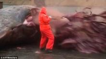 เมื่อผ่าท้องปลาวาฬที่เกยตื้นออกมา ก็เจอกับสิ่งนี้!!