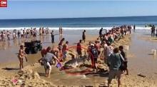 นทท.นับร้อยช่วยกันลากฉลามขาวยักษ์กลับสู่ทะเล...แต่สายเกินไป!?