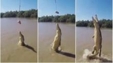 วินาทีจระเข้กระโจนขึ้นเหนือน้ำได้สูงมากๆ เพื่อเขมือบอาหาร