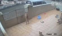 คนรักสัตว์มีร้อง!! สุนัขเฝ้าบ้านอย่าคิดว่าปลอดภัย..
