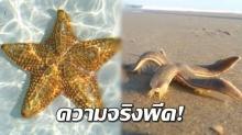 อวสานสัตว์โลกน่ารัก!! วินาที ปลาดาวเคลื่อนที่ไปบน ชายหาด  ทำไมไม่เหมือนในการ์ตูน?(คลิป)