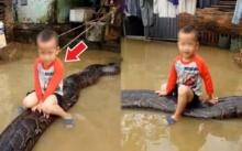 คุณพระ!!! หนูน้อยวัย 3 ขวบ ขี่งูหลามตัวยาวกว่า 6 เมตร ช่วงน้ำท่วม (คลิป)