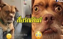 ฮาไม่ไหวแล้ว!! น้องหมาแสดงอารมณ์เก่ง เหมือนไอคอนอีโมจิทุกตัว ไม่ว่าจะทุกข์หรือสุข (คลิป)