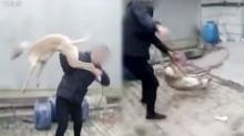 หนุ่มจับสุนัขฟาดพื้นจนตาย วางเงินพนันแข่งสุนัขไว้ แต่แพ้จนหมดตัว (คลิป)