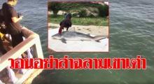 นักดำน้ำ วอนอย่าล่าฉลาม ชี้สะท้อนระบบนิเวศน์สมบูรณ์ ควรให้ความรู้ ทำแหล่งท่องเที่ยว(คลิป)