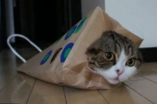 แมวที่กำลังโด่งดังในโลกไซเบอร์