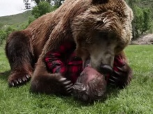 ชายหนุ่มกับหมีตัวโต นี่เล่นกันแบบ สนิ๊ท สนิท