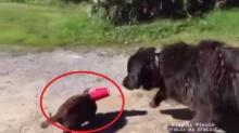 สุดซึ้ง! หมาฮีโร่ช่วยแมวหัวติดคากระป๋องได้สำเร็จ