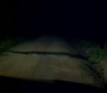 ผงะ งูเหลือมยักษ์นอนขวางถนน คนขับรถต้องขอขมาก่อนยอมเลื้อยเปิดทาง