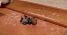 สยอง! แมงมุมตายแล้วมีตัวอะไรออกจากร่างเนี่ย?