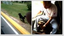 สุนัขซื่อสัตย์วิ่งตามรถที่เจ้าของขึ้น