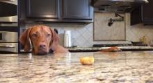 เมื่อน้องหมา อยากกินขนม