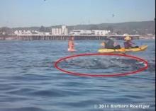 ช๊อก! สาวเกือบถูกปลาวาฬเขมือบทั้งเป็น!