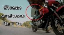 อยากให้ดู!!! วิถีชีวิตของหมาข้างถนนใน 1 วัน มันต้องเผชิญกับอะไรบ้าง!!