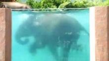 สวนสัตว์เปิด ฟูจิ ซาฟารี พาร์ค ในญี่ปุ่น ลงทุนสร้างสระว่ายน้ำให้ช้าง