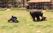 น่ารักจัง!! เมื่อแกล้งทำร้ายควาญช้า มาดูกันว่าเจ้าช้างจะทำยังไง!!