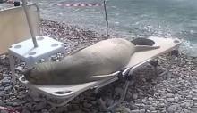คลิปชวนยิ้ม!! สิงโตทะเลนอนแผ่อาบแดดบนเตียงริมหาด