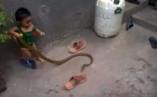หนูสตรองไปมั้ย!? พ่อแม่อยู่ไหนปล่อยให้เล่นกับงูแบบนี้