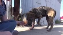 สุนัขที่โชคดีที่สุดในโลก