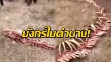 ชาวบ้านแตกตื่น! พบโครงกระดูกปริศนายาว 18 เมตร เชื่อเป็นซาก มังกร ตามตำนาน(คลิป)