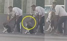 ฮีโร่ตัวจริง!! เมื่อชายหนุ่มพยายามช่วยน้องหมา ด้วยวิธีน่าเอ็นดูแบบนี้? (คลิป)