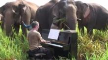 นักดนตรีเล่นเปียโนให้ช้างฟัง เจ๋งอะ!