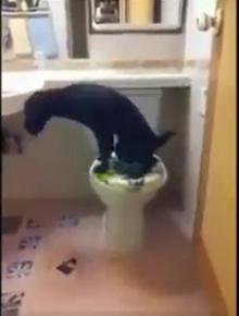 ไม่เชื่อก็ต้องเชื่อ!!ขั้นตอนการใช้ห้องน้ำของ สุนัข แสนรู้