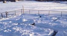 หาเจอมั้ย? เจ้าหมาเล่นซ่อนแอบในเขาวงกตหิมะ