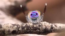 ลืมภาพที่น่ากลัวไปเลย! แมงมุมเต้นประกอบเพลง YMCA