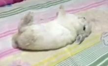 น่ารัก!!! กระต่ายแกล้งตายสุดเนียน