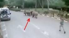 แรดสาว 3 ตัว แอบหนีออกจากสวนสัตว์ เหตุคนดูแลเผลอหลับ!!
