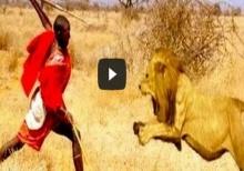 ชนเผ่าใจกล้า! เข้าไปแย่งเนื้อจากสิงโตแบบที่สิงโตยังวิ่งหนี