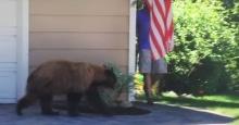 """ยอดวิวถล่มทลาย!! แค่ """"หมีน้อย"""" กลัวคนใส่กางเกงขาสั้น!!"""
