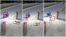 แฉนาทีโหด หนุ่มลากปืนยาวไปจ่อยิงสุนัขตายอนาถ