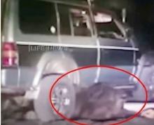 สุดโหดขับรถทับหมียักษ์ พอมันหลุดมาได้เท่านั้นแหละ!!