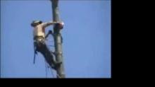 อุบัติเหตุจากการตัดต้นไม้ !