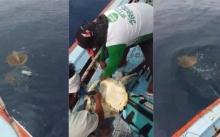 นักตกปลาช็อก!! เมื่อเห็นเจ้าเต่าทะเลลอยมาเทียบข้างเรือด้วยสภาพแบบนี้