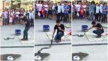 หนุ่มโชว์วิธีการจับงูเห่าแบบชิลล์ ๆ ลองมาดูกัน