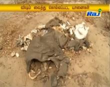 สลดซากช้างป่าตายเกลื่อนซิมบับเว 22 ตัวเชื่อเจ้าหน้าที่วางยา