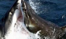 นาทีระทึก!ฉลามแย่งเหยื่อ - ฟัดกันเอง นอกชายฝั่ง