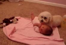 น่ารัก! สุนัขแสนรู้ ปกป้องเด็กน้อยจากเสียงเครื่องดูดฝุ่น