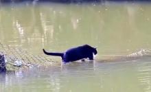 เจ้าแมวเหมียวทุกตัวไม่ได้กลัวน้ำอย่างที่เราคิด!