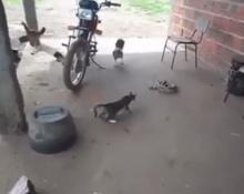 เสียแมวเลย อย่าแกล้งกันแบบนี้ดิ!!!