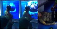 อย่าเอามือไปวางบนกระจกตู้โชว์ของปลาฉลาม ไม่งั้นจะเกิดเรื่องแบบนี้ขึ้นก็ได้