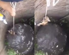 ลุ้นระทึก! นาทีช่วยชีวิต หมาตกบ่อน้ำลึก!