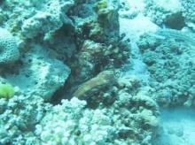 เจ๋งมาก!! ปลาหมึกโชว์พรางตัวเข้ากับสภาพแวดล้อม