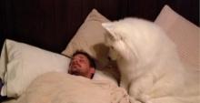 """หมาตัวนี้ขึ้นไปบนเตียงเจ้าของสิ่งที่มันทำ """"น่ารัก"""" สุดๆ!!"""