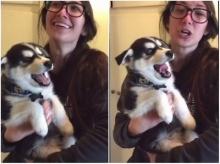 ลูกหมาไซบีเรียนฮัสกีสุดน่ารัก ไม่ยอมเห่า แต่??